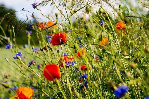 Come fanno i fiori a sapere quando sbocciare