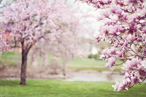 che-fiori-metto-sul-balcone-ad-aprile