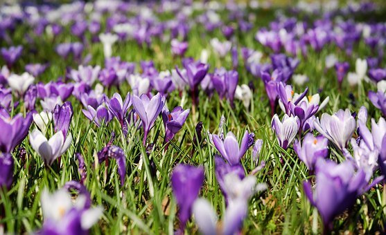 immagini-di-primavera