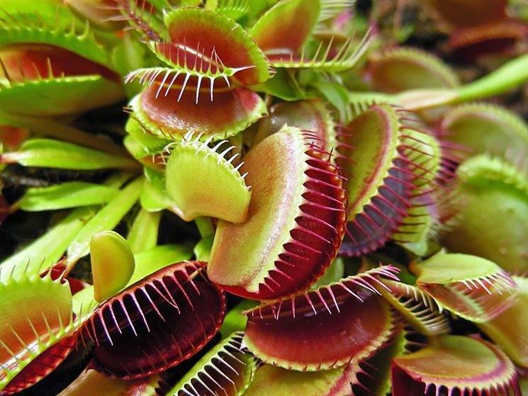 le-piante-carnivore