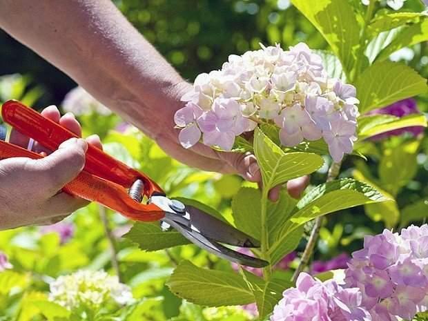 tecniche-per-far-durare-i-fiori