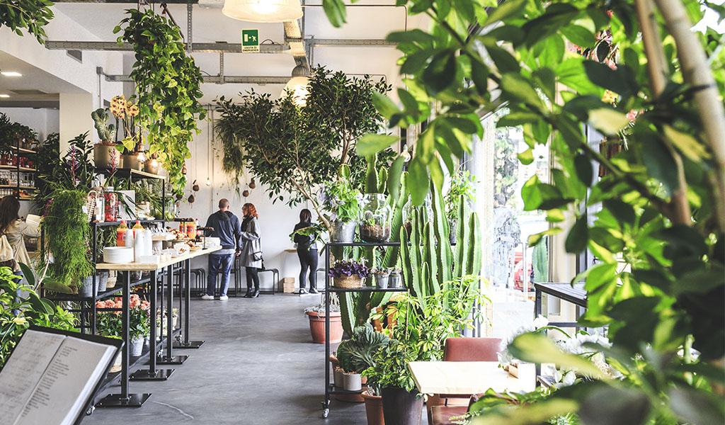 Signorelli Coffee & Flowers
